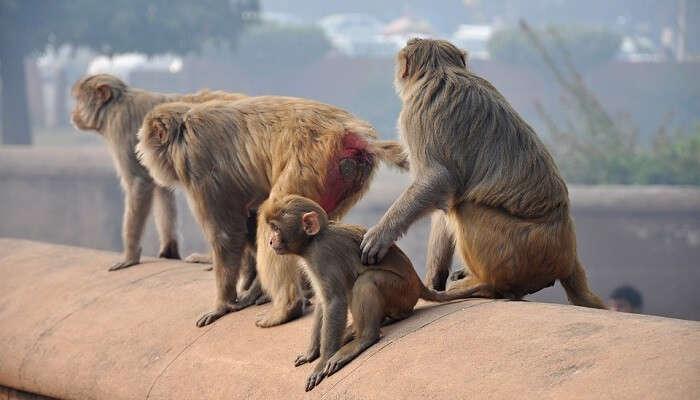monkeys at kam shan country park