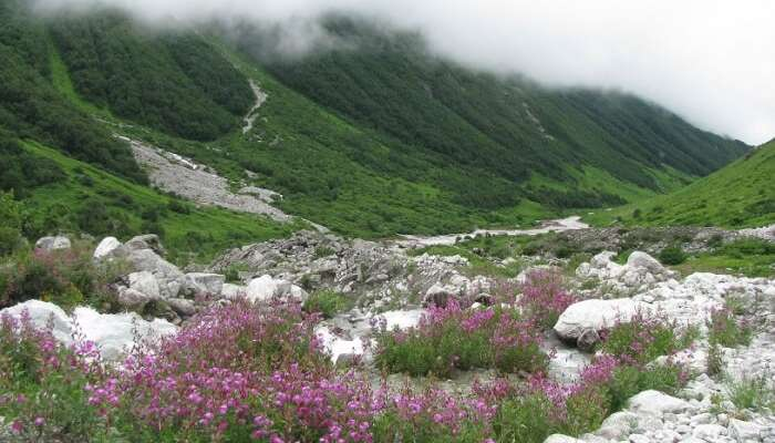 Valley Of Flowers View
