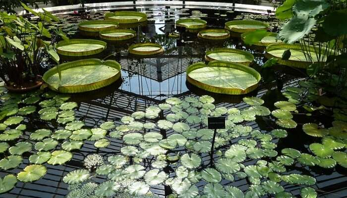 garden with water lilies