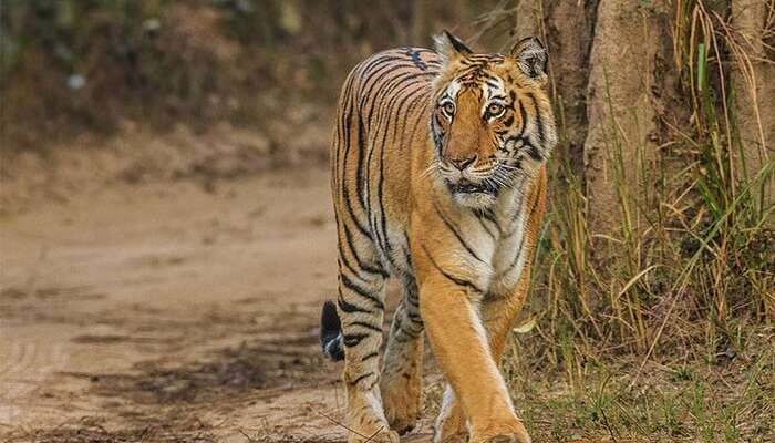 Best Time To Visit Jim Corbett National Park