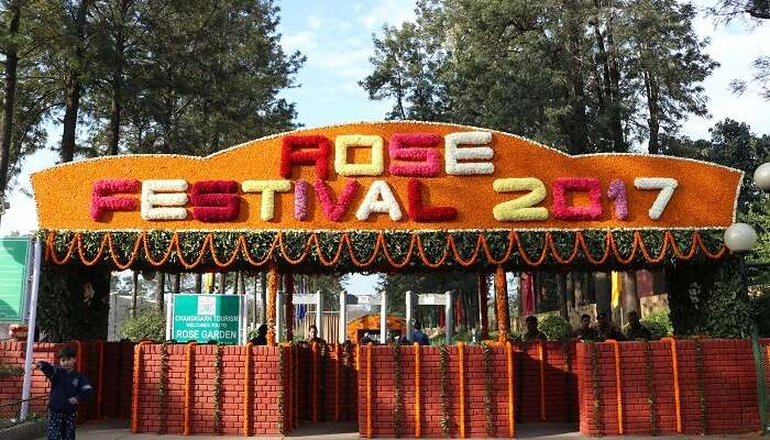 Attend The Rose Festival In Chandigarh