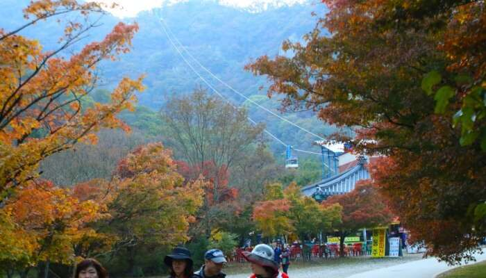 63800ba3ae50e Autumn In Seoul: 7 Attractions You Should Head To In 2019