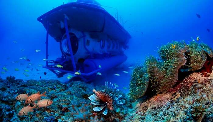Opt For Blue Safari Submarine