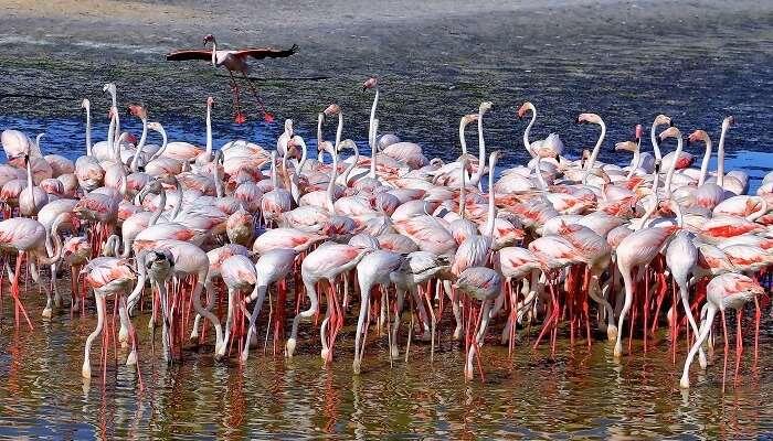 Watch flamingos