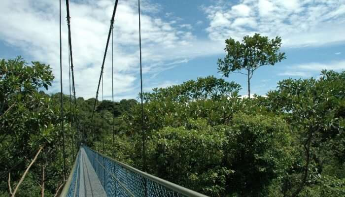 Hike At MacRitchie Reservoir