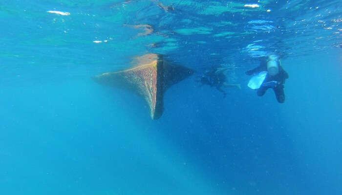 Whale Submarine View
