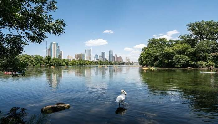 Why You Should Visit Austin In August