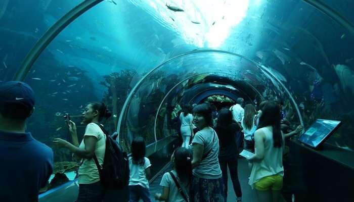 Singapore Aquarium Snorkelling