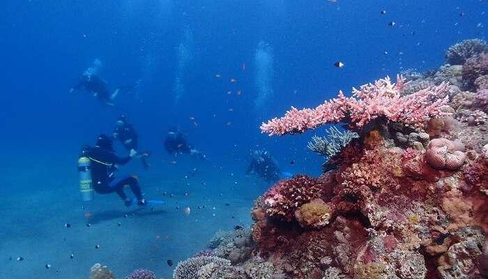 snorkeling red sea