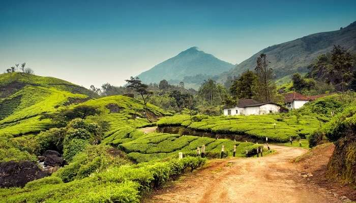 Munnar honeymoon places