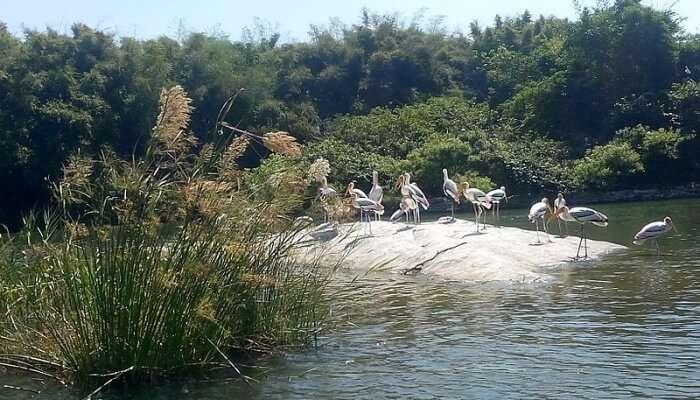 Bird Sanctuary at island