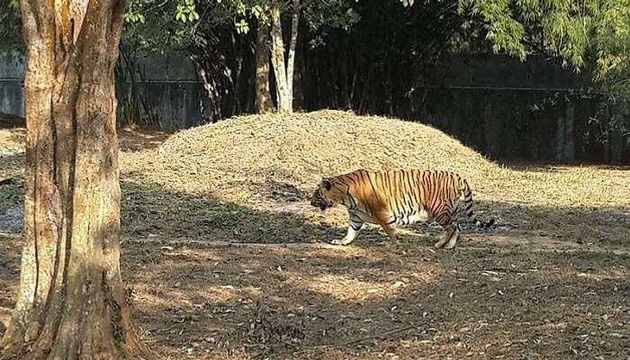 Sepahijala Wildlife Sanctuary