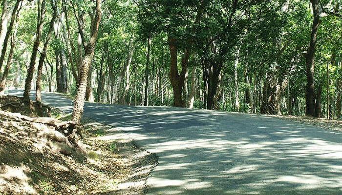 Marayoor Sandstone Forest
