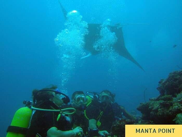Divers with a stingray at Manta Island in Maldives