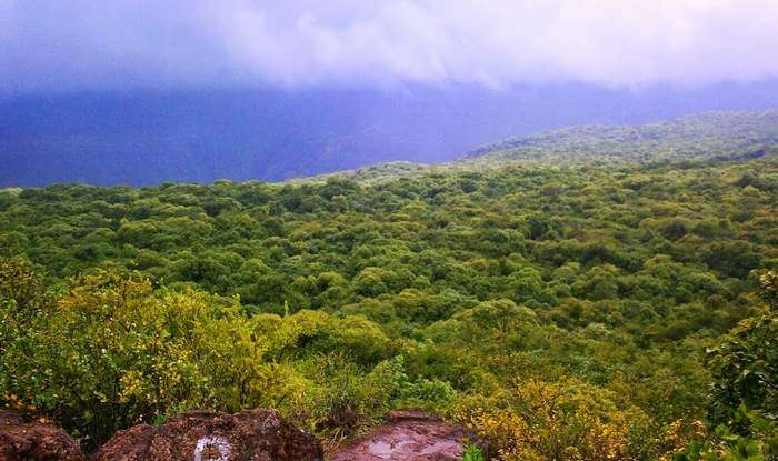 essay on my favourite tourist place mahabaleshwar
