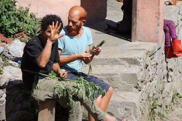 Israelis travelers rubbing up fresh hash