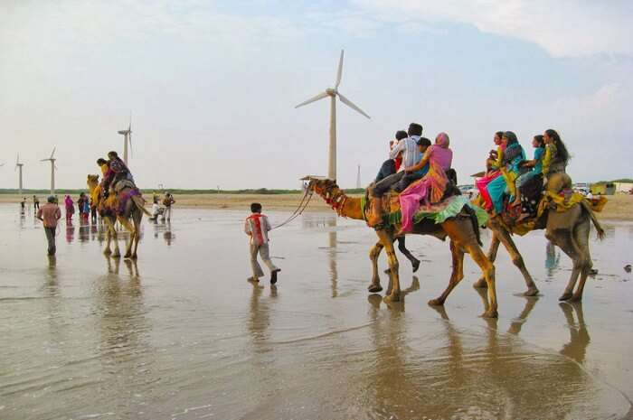 Camel ride by the Mandvi beach is another major attraction during Rann Utsav