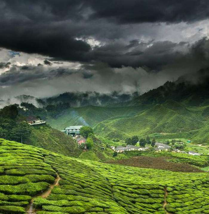 Munnar-The-Stupendous-Hill-Station-in-Kerala-TravelTriangle1