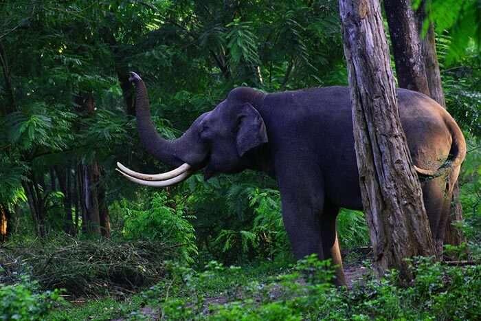 The sanctuary to spot elephants