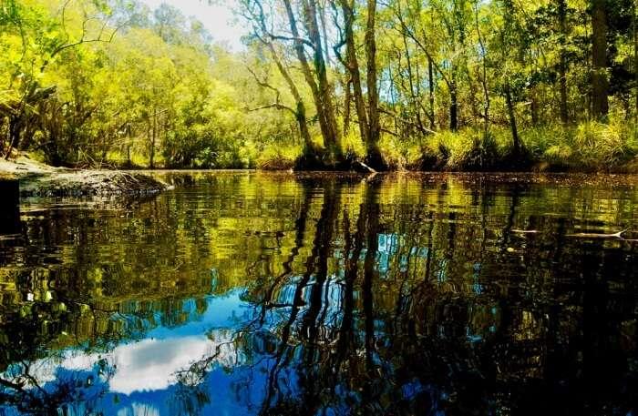 Noosa Everglades View