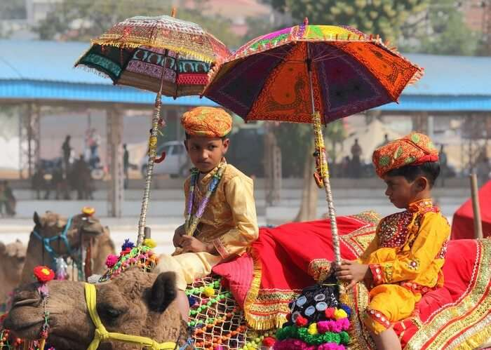 Kids riding camels during the Pushkar Camel Fair which is one of the most popular animal festivals in world