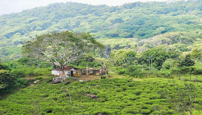 Sinharaja Forest Reserve_24th oct
