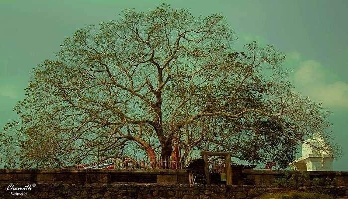 Thanthirimale Rajamaha Viharaya