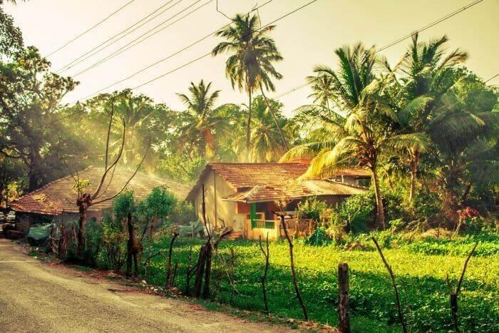 Walk through the rural side of Goa