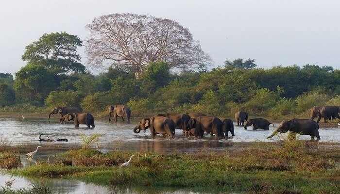 elephant safari in harbarana