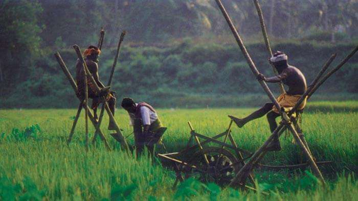 Men working in the paddy fields of the village of Karumadi in Alleppey