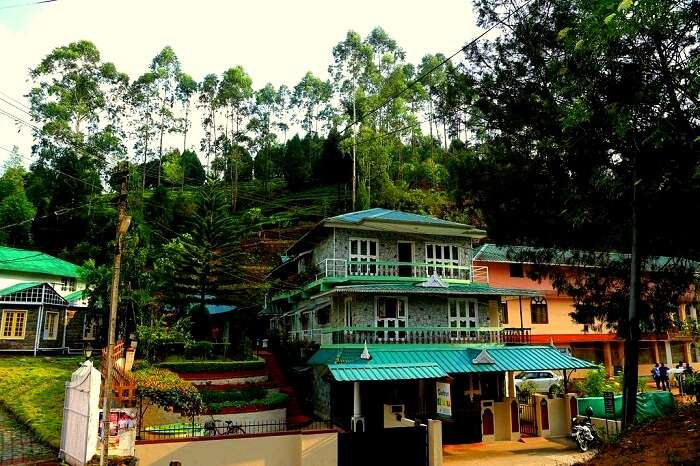 government homsetay munnar