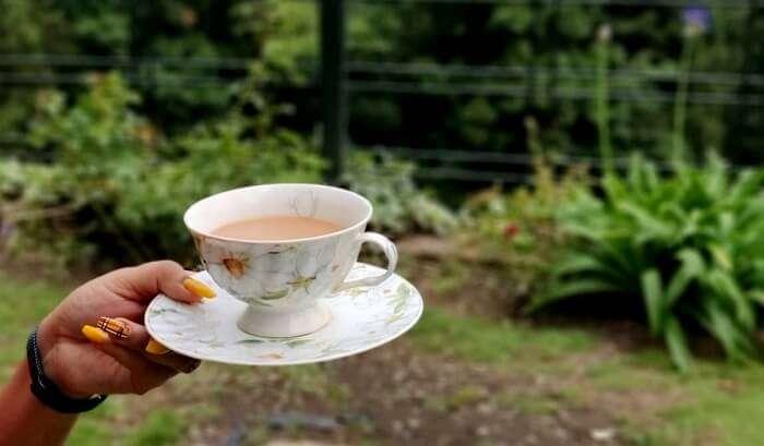 tea and nature's bounty in nainital