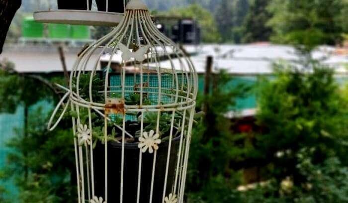 birdhouse at heritage resort nainital