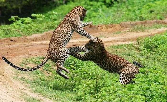 Wildlife adventures at Willpattu National park, Sri Lanka