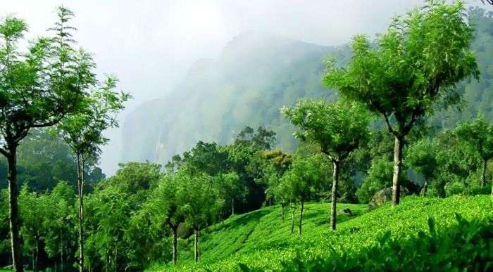 Velvet lawns, exotic flora and the cool mountain breeze at Coonoor hills