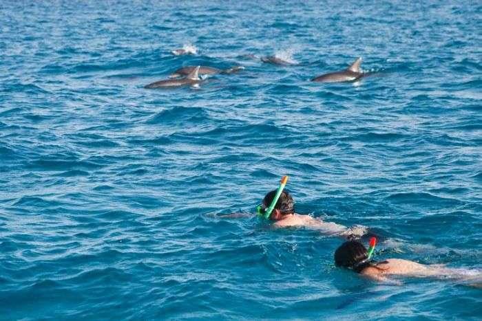 Swim with dolphins in the islands of Zanzibar Archipelago