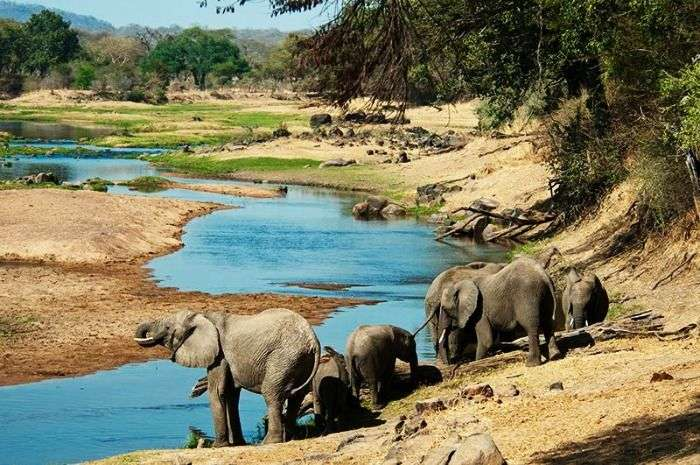 Capture elephants at Selous Game Reserve in Tanzania