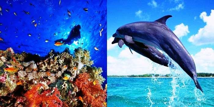 Underwater activities in Goa and Gokarna