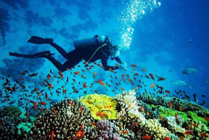 Scuba diving in Andaman and Nicobar Islands