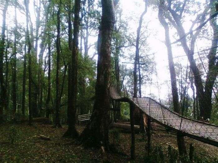 A wooden walkway in Lolegaon