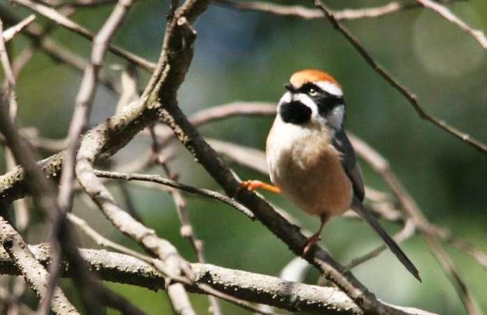 Visit the Pangot and Kilbury Bird Sanctuary