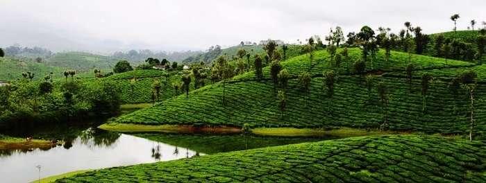 Valparai is a mesmerizing hill station in Tamil Nadu