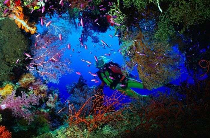 A diver experience the colorful corals of Cayman Islands - the amazing diving spot in the world.