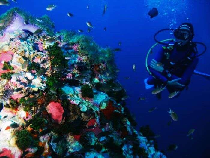 Koh Tao in Thailand is one of the best scuba diving spots in the world