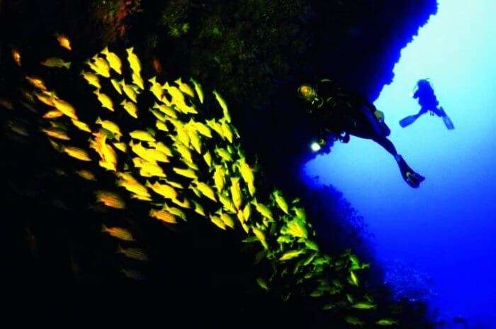 Maaya Thila in Maldives is one of the best diving sites in the world