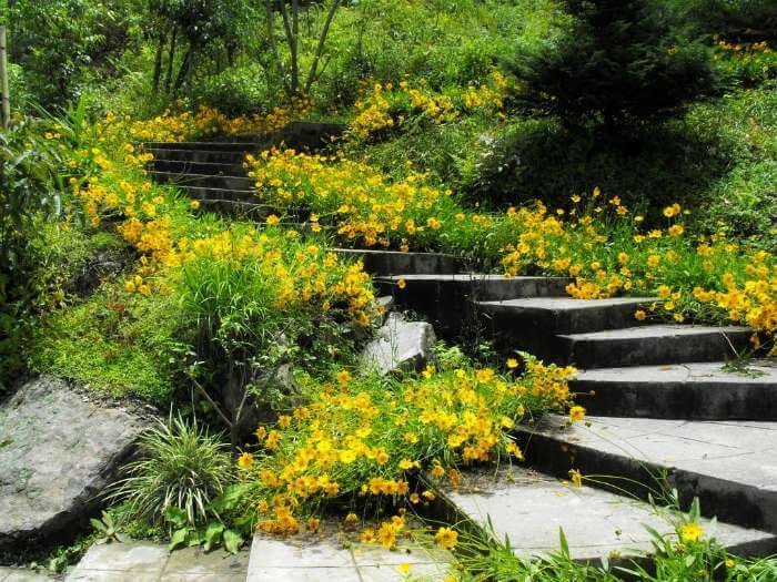 Lovely yellow flowers at Namchi