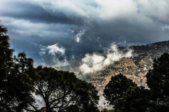 The pine trees and the misty hills of Parwanoo