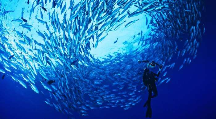 The dense marina life at one of the best diving spots in the world - Sipadan Island