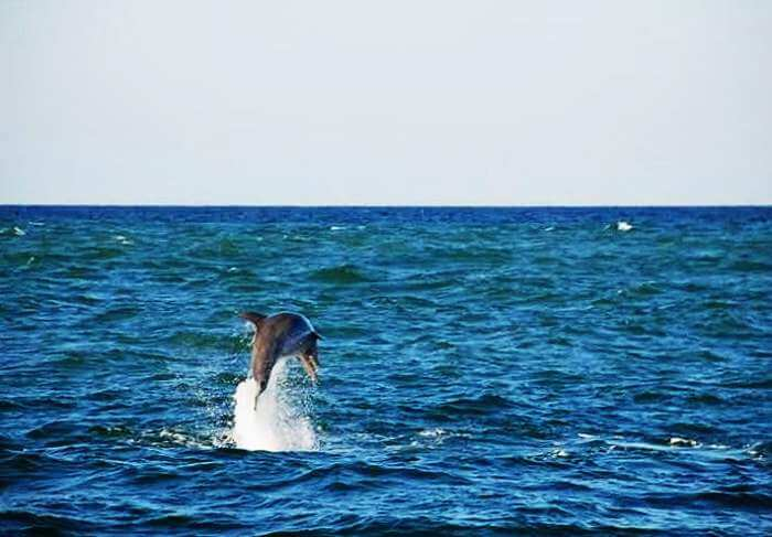 Relax at this secluded getaway and spot a dolphin or two in Harnai-Anjarle