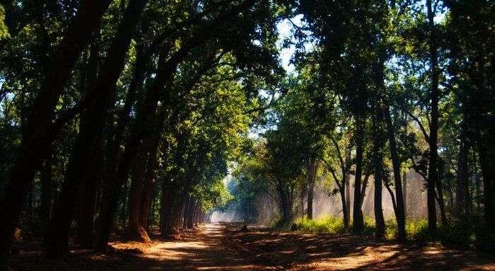 The jungle boulevards of Corbett National Park